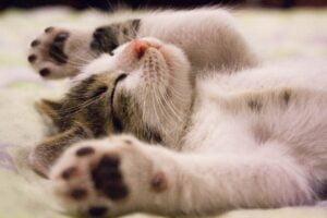 kot ma ubezpieczenie zwierząt